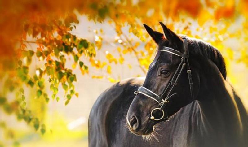 România eternă! Un tânăr este cercetat după ce a furat calul părinților și a fugit la oraș!