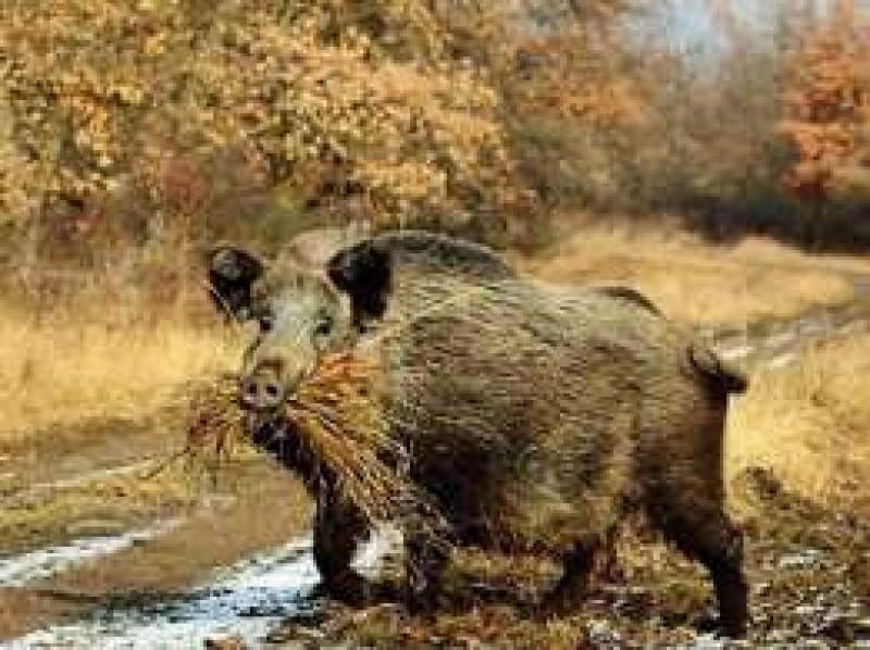 Romgaz urmareste si comportamentul animalelor pentru a face prognoze de iarna