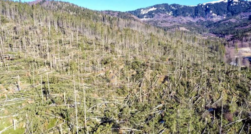 Romsilva anunță că s-a mai scris o pagină în Apocalipsa Meteo: 100 000 de hectare pădure au fost afectate de fenomenele meteo extreme de la începutul lunii Februarie!