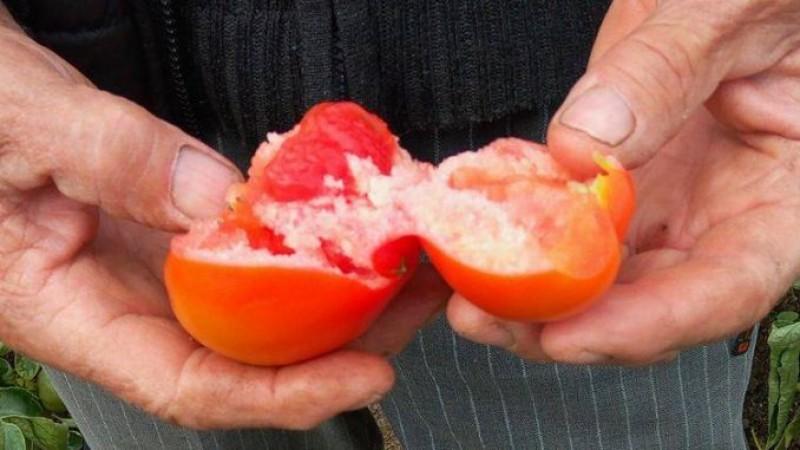 Sănătatea ta: Cum deosebim roșiile colorate artificial de tomatele coapte fără chimicale!