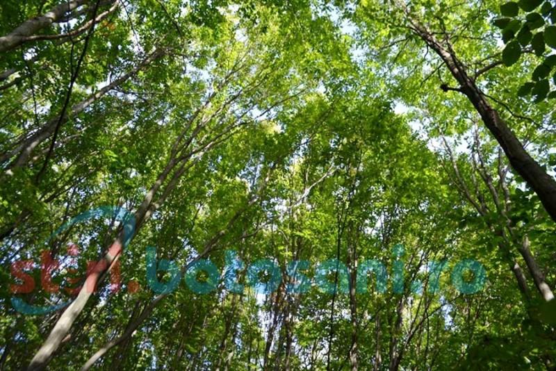 Sancţiuni pentru operatorii ce exploatează pădurile botoşănene