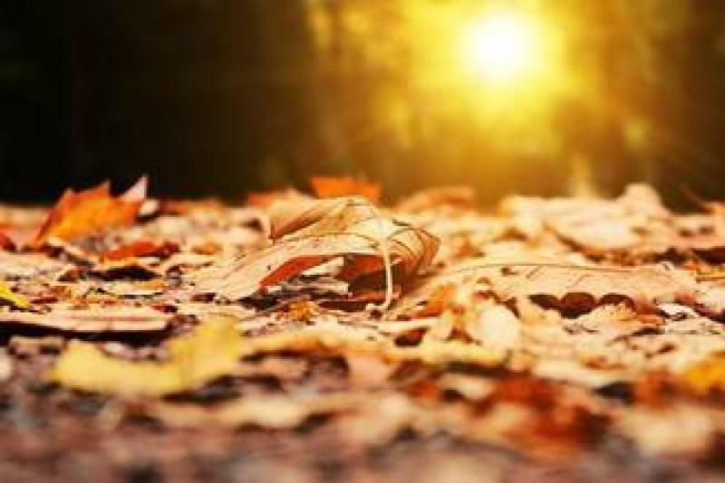 Săptămâna începe bine, de marți frigul pune stăpânire pe țară. Câte grade vor fi la Botoșani!