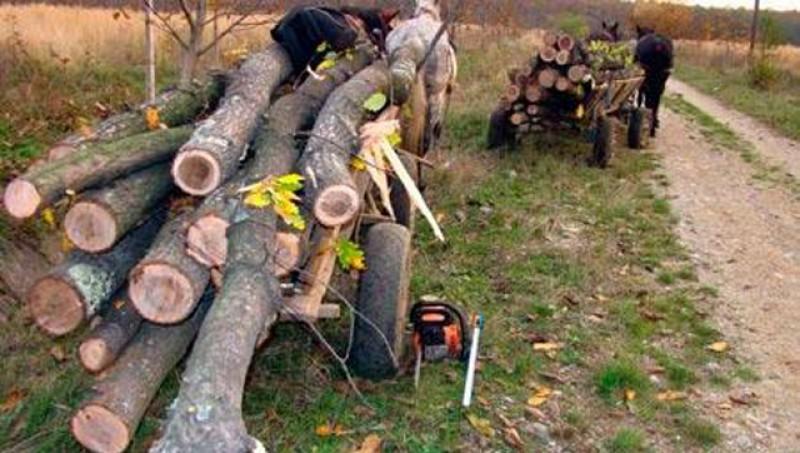 Se fură pădurea fără nicio rușine