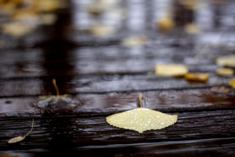 Se răcorește si vin ploile. Câte grade vor fi la Botoșani!