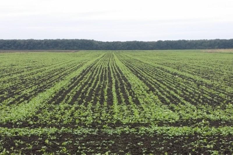 Seceta compromite culturile de toamnă. Eficienţa culturilor de primăvară, puse sub semnul îndoielii
