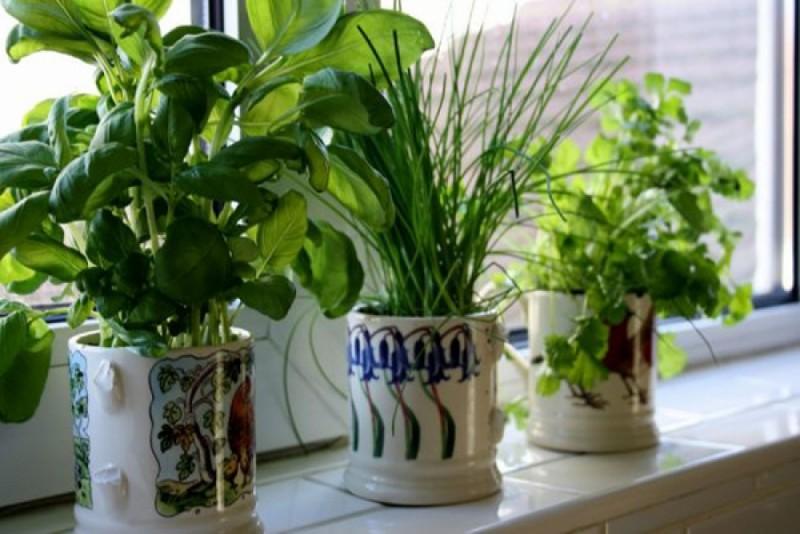 Sfaturi pentru îngrijirea plantelor din ghiveci!