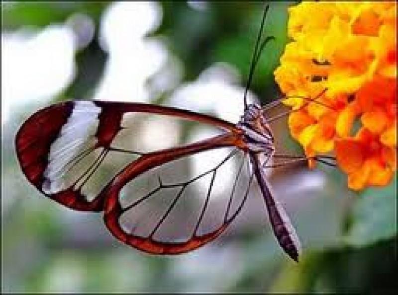 Sfaturi pentru părinţi – Lecţia fluturelui
