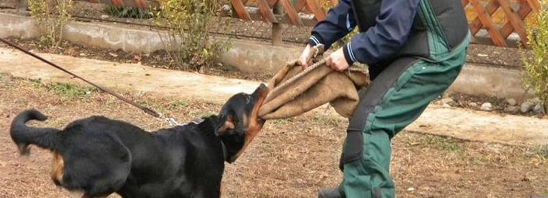 """Sfaturile unui dresor: Cum ne apărăm când suntem atacaţi de câini. """"Nu cumva să fugiţi"""""""