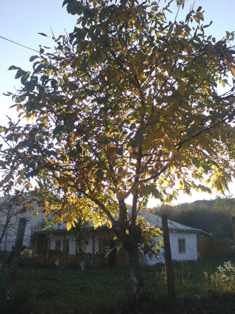 Soare de octombrie