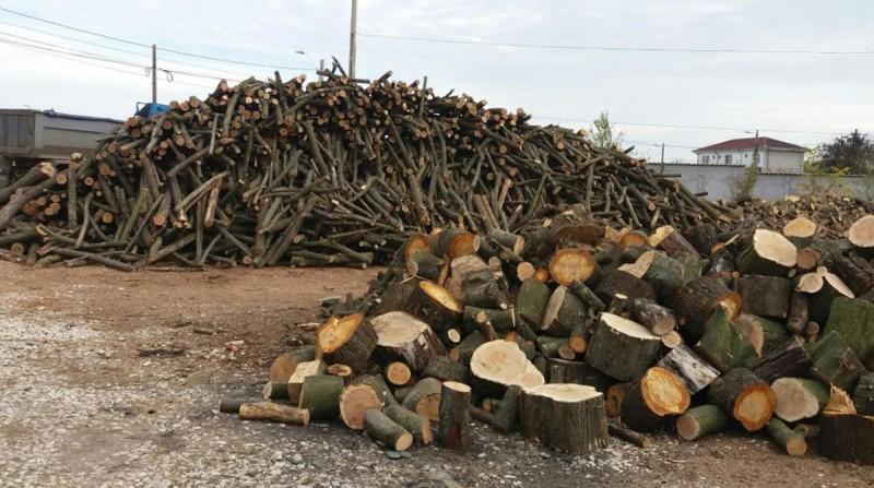 Societate din Dorohoi, amendată pentru comerț ilicit de lemne