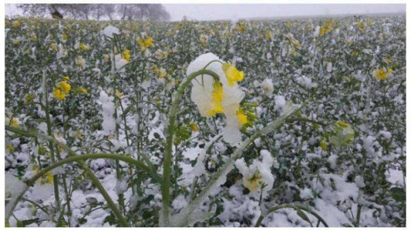 Sprijin pentru fermierii afectați de îngheț și ninsoare în aprilie? Ce transmite Ministerul Agriculturii!
