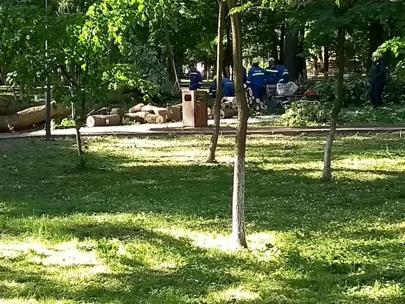 """Arbore secular din parcul """"Eminescu"""", doborât de vânt"""