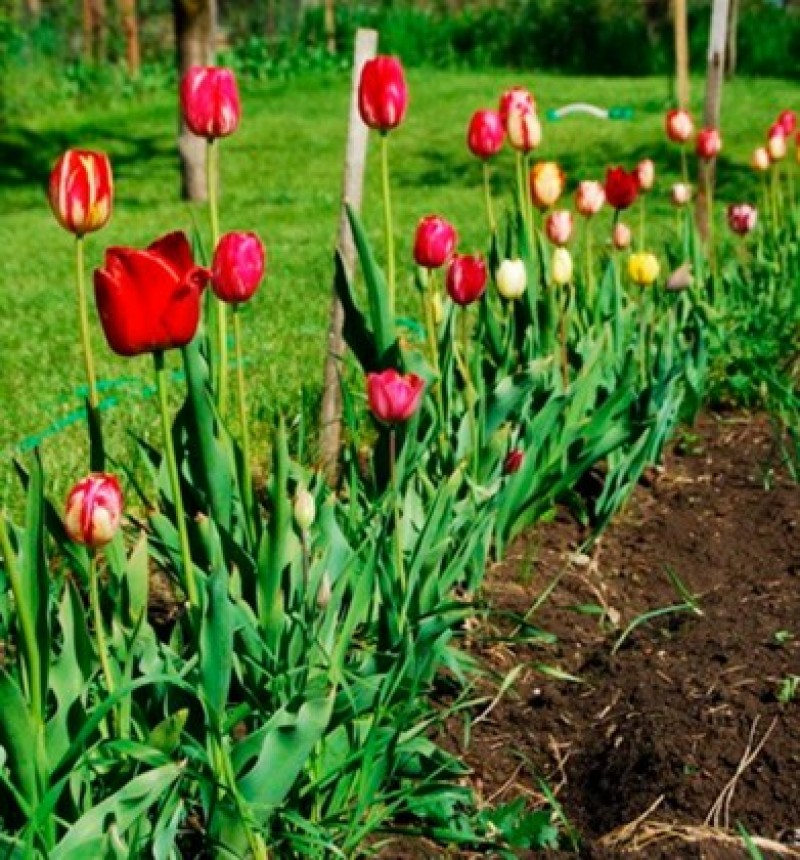 Știi cum să pregătești grădina pentru flori?
