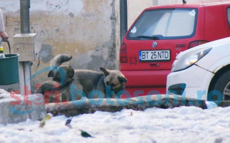 Strigăt de ajutor tratat cu indiferenţă! Botoşănenii din Parcul Tineretului, în pericol din cauza câinilor de la ghetouri! FOTO, VIDEO