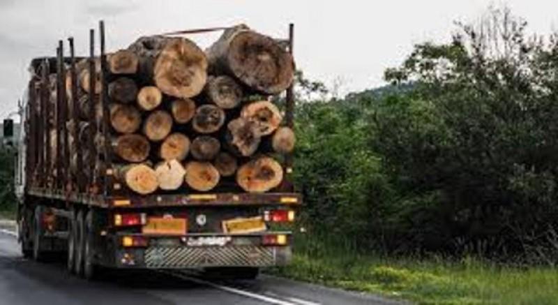 Sute de metri cubi de lemn confiscate de Garda Forestieră Județeană Botoșani