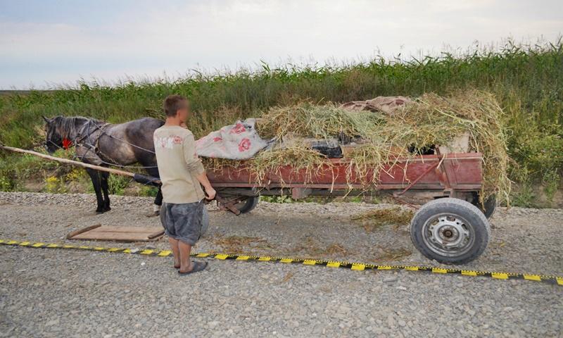 Contrabandă cu căruța! Captură importantă de țigări pe un drum din județul Botoșani! FOTO