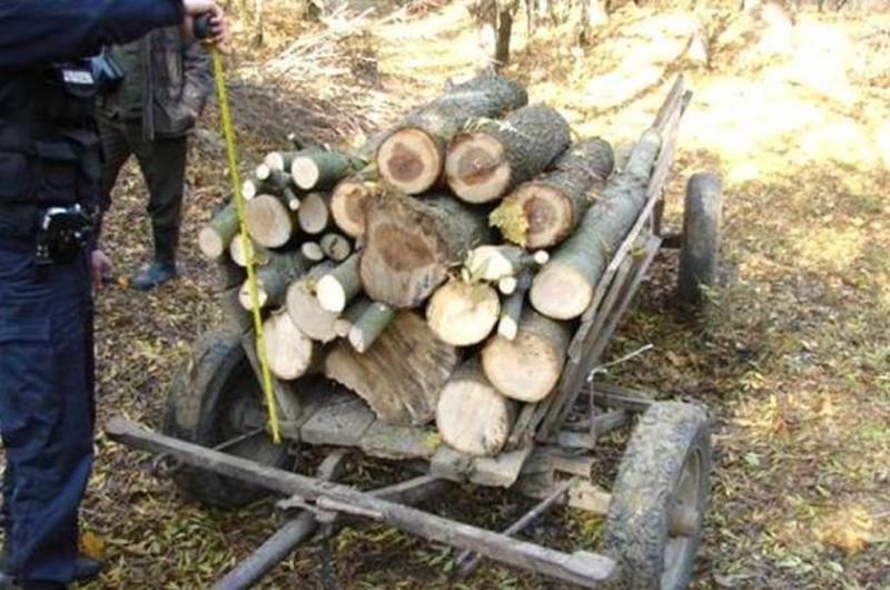 Timp de o lună, s-a aprovizionat cu lemne din pădurile altora!