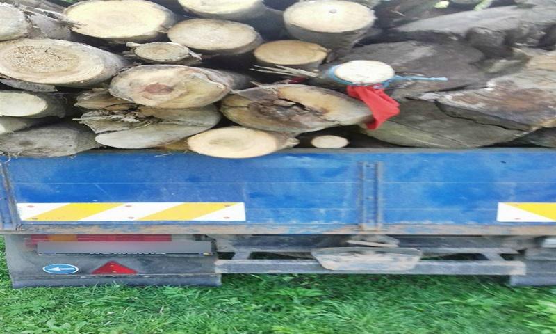 Transport ilegal de material lemnos, depistat de poliţiştii de frontieră!