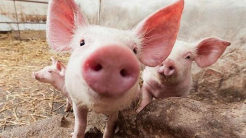 Trei botoşăneni au ajuns la Urgenţe după ce au fost atacaţi de animalele din curtea casei!
