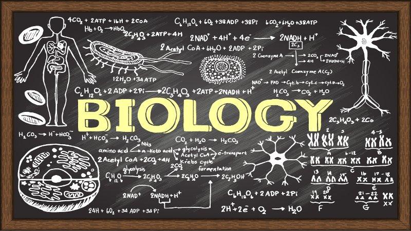 Trei elevi din județul Botoșani s-au calificat la etapa națională a Olimpiadei de Biologie