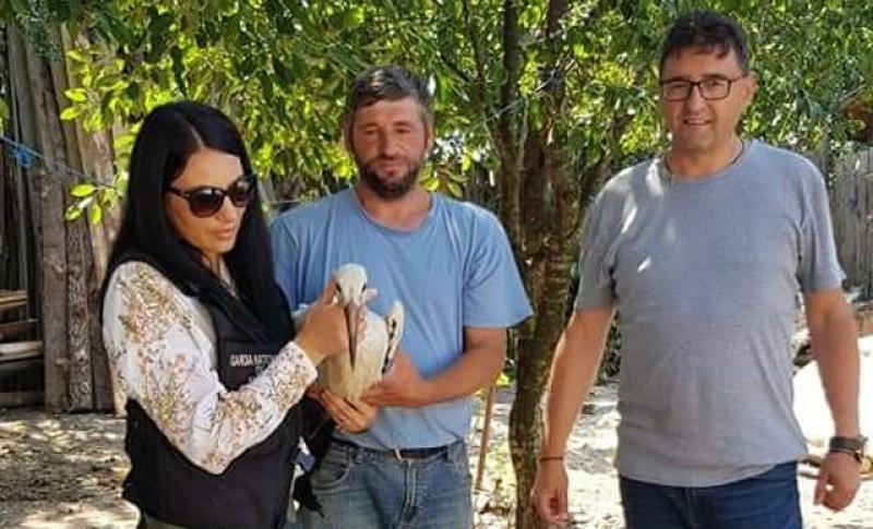 Trei exemplare de barză albă au fost salvate de medicii veterinari de la Botoșani