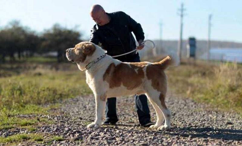 Trei tineri au fost reţinuţi pentru 24 de ore după ce au furat opt câini de rasă în valoare de peste 5000 de euro