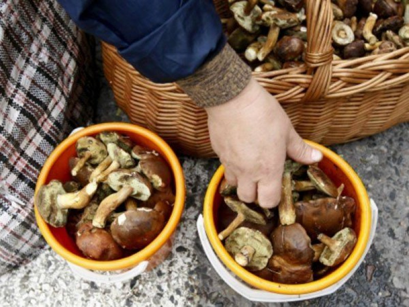 Trimis la Iași după grave complicații din cauza consumului de ciuperci!