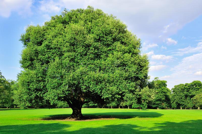 Tu știi ce copac ești? Dicționarul botanic al zilei tale de naștere!