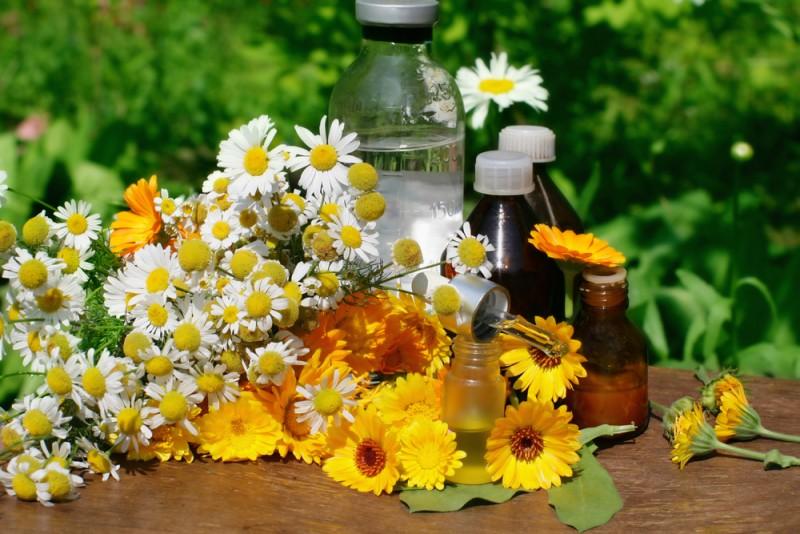 Tu știi cum se culeg plantele medicinale?