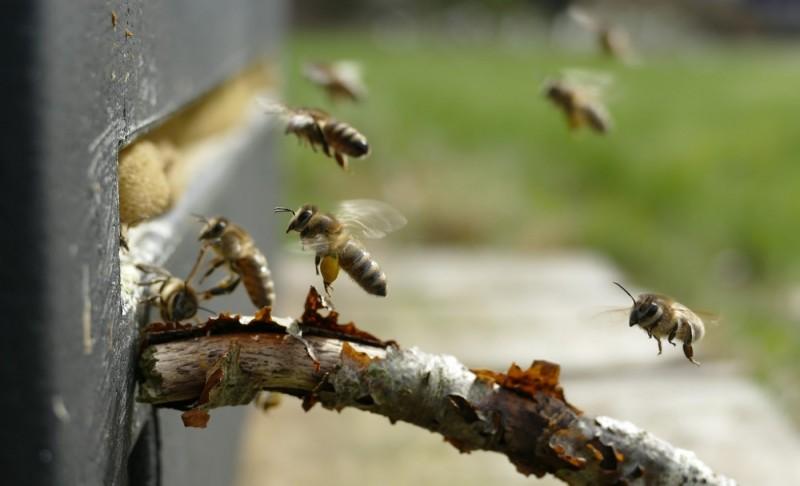 Un ac mic pune în primejdie o viață: Înțepătura de viespe i-ar fi putut fi fatală!
