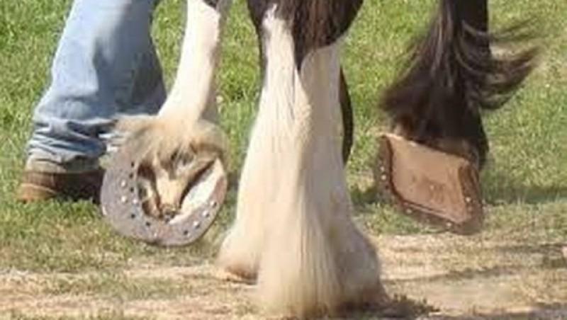 Un bărbat a ajuns la spital după ce a fost lovit cu copita de calul din gospodărie