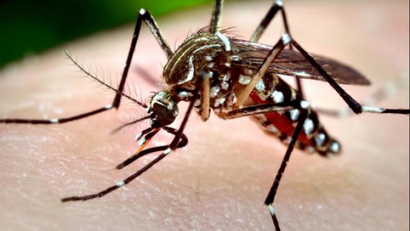 Un botoșănean a murit în urma infecției cu virusul West Nile!