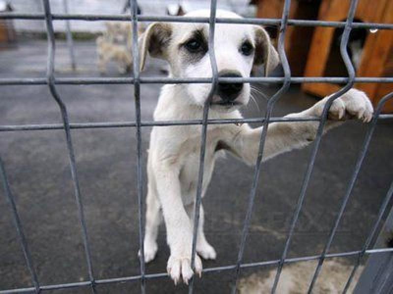 Un cabinet veterinar din Botoșani caută voluntari