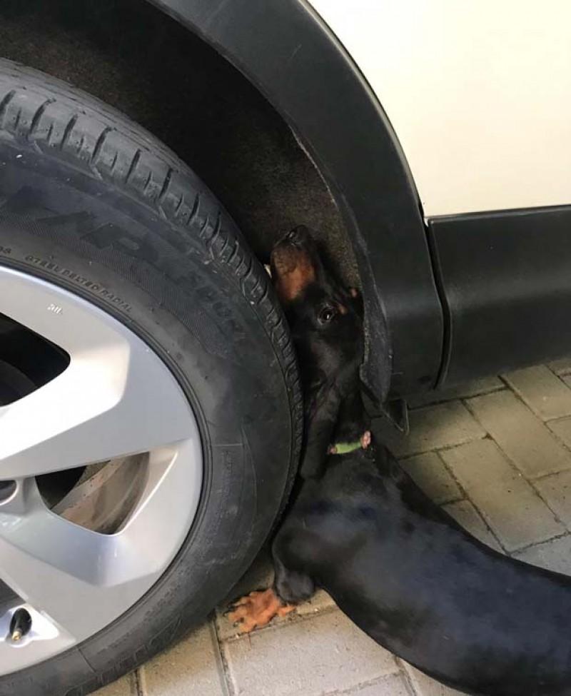 Un cățel cu gâtul blocat între roata și caroseria unui autoturism a fost salvat de pompierii dorohoieni!
