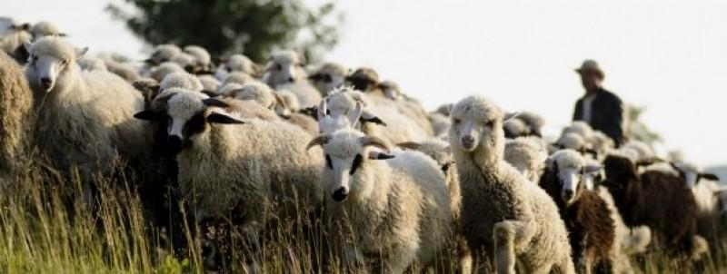 Un cioban din Botoșani a mers pentru prima dată, în 69 de ani, la medic. Ce li s-a aratat doctorilor ieșeni in timpul examenelor medicale! Un caz unicat