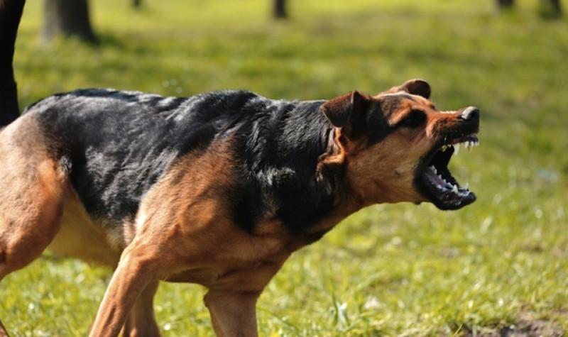 Un copil de 6 ani a fost trimis la Iași în stare gravă după ce a fost atacat de câinele familiei!