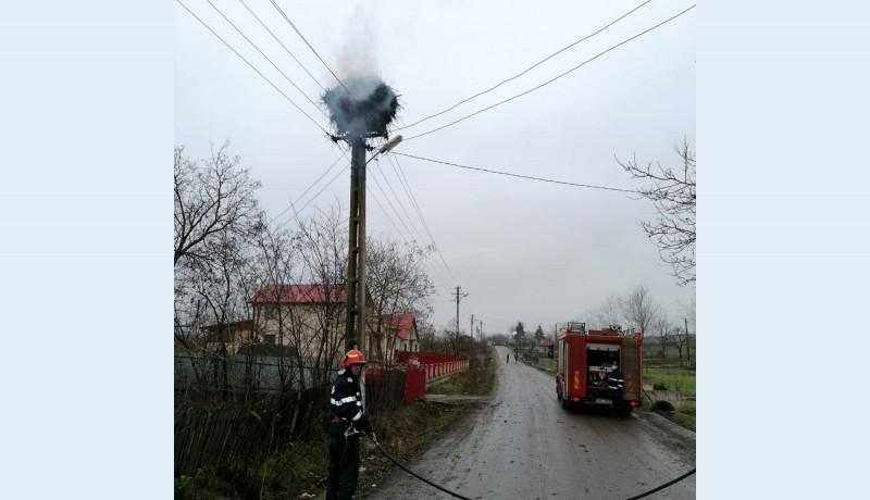 Un cuib la care berzele se întorceau în fiecare primăvară, de 30 de ani, a luat foc