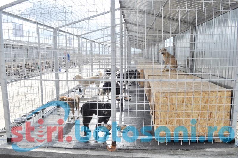 Un nou contract pentru capturarea câinilor de pe străzile din Botoşani