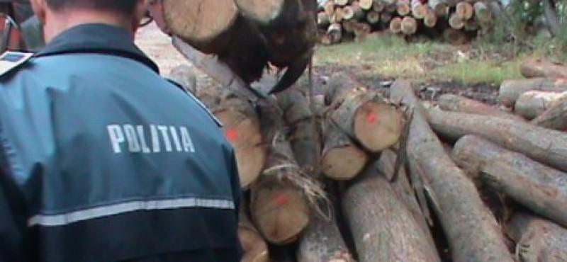 Un şofer ce transporta lemne fără acte a fugit când a fost tras pe dreapta de poliţişti!