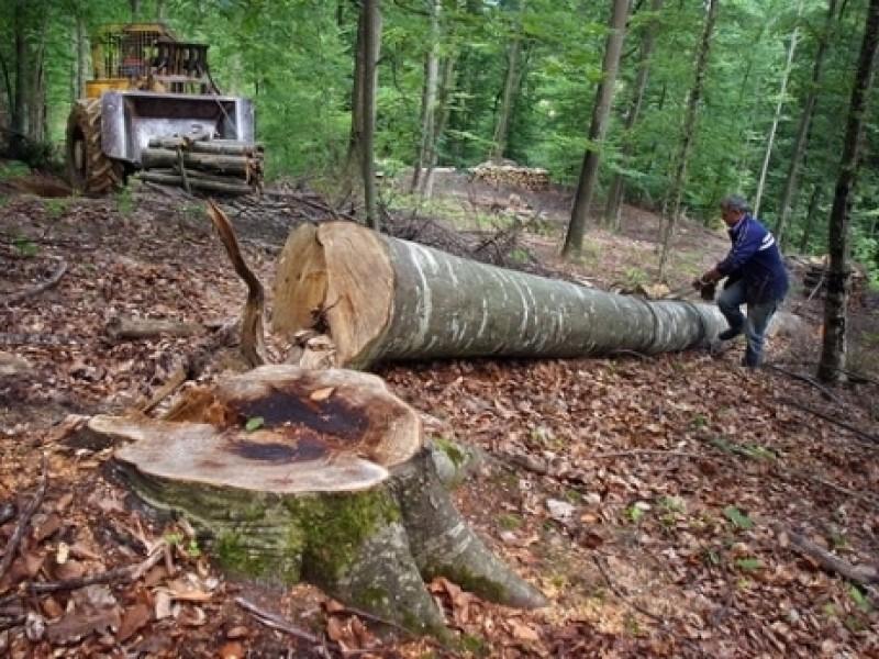 Urmările șpăgii de 1 milion de euro: Universitatatea Harvard vinde în regim de urgență pădurile din România! Vezi suprafaţa detinută în Botoşani!