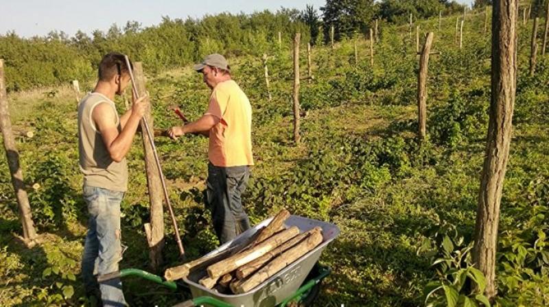 UTIL: Cea mai ieftină metodă de a obține stâlpi de susținere pentru livadă, vie sau grădină