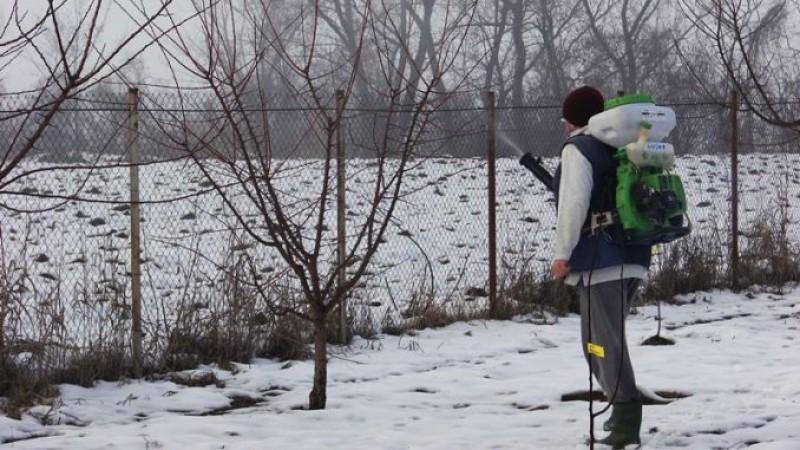 UTIL - Stropiri de iarnă în livadă: Ce tratamente se aplică pomilor fructiferi în acest sezon!