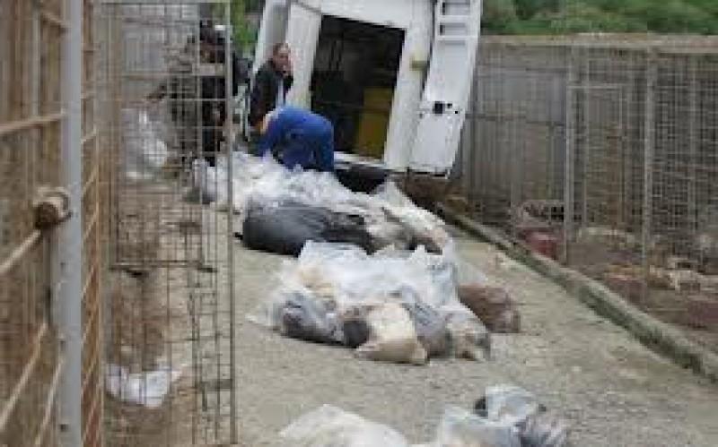 """Verdict în dosarul uciderii celor 200 de câini la Botoșani: """"Fapta nu era prevăzută de legea penală"""", spun procurorii!"""