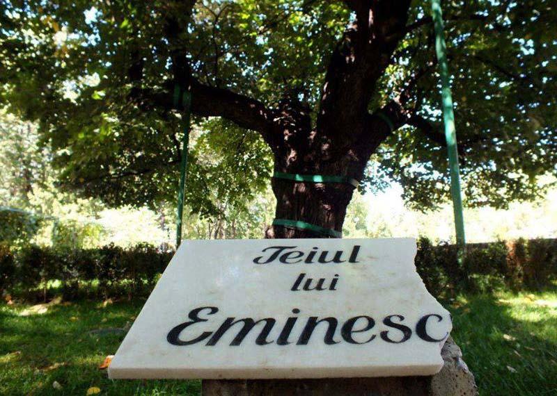 VERSURI DIN STRADĂ: La teiul lui Eminescu. De Emilia-Paula Zagavei