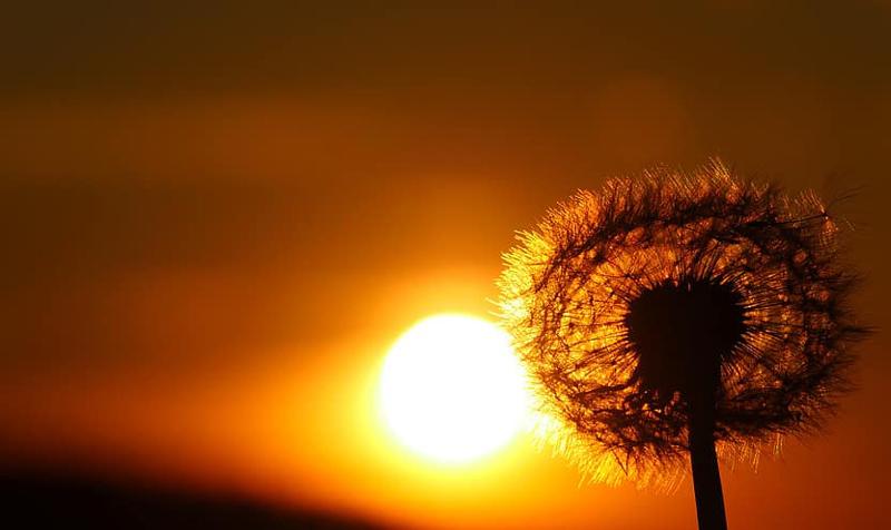VERSURI DIN STRADĂ: Vară mirosind a lună. De Ciubotariu Mihaela