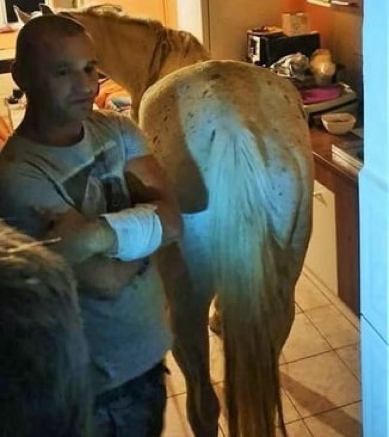 VIDEO - Se întâmplă în România: Cal găsit de poliție într-un apartament, la etajul 4!