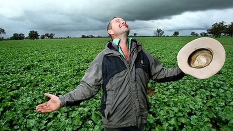VIN PLOILE! Care este starea culturilor agricole