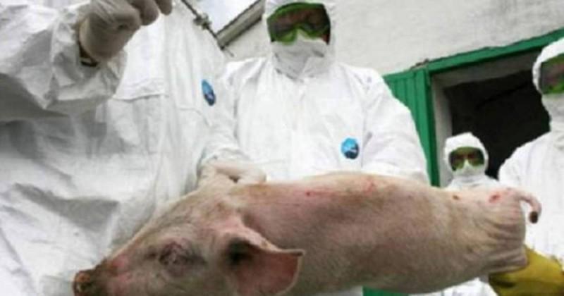 Virusul pestei porcine africane încă mai bântuie județul