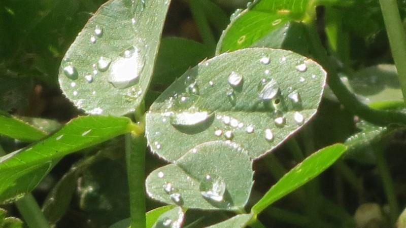 Vremea se menţine instabilă, cu averse şi descărcări electrice