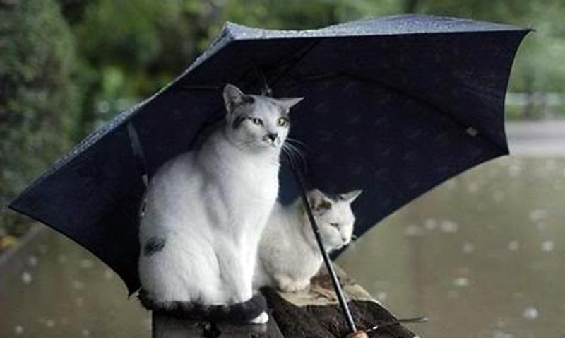 Weekend friguros, cu ploi și vânt. Câte grade au fost în această dimineață la Botoșani!